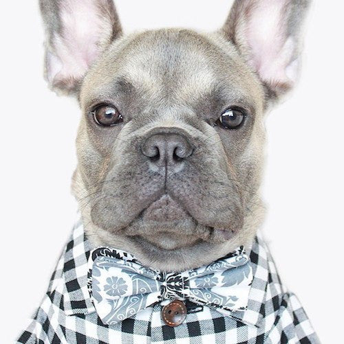 Gingham Button Down - Sir Dogwood