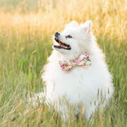 Harper Floral Bow Tie Collar - Sir Dogwood