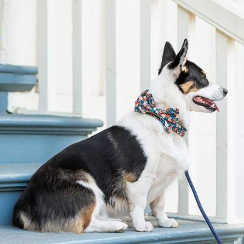 Inky Blooms Bow Tie Collar - Sir Dogwood