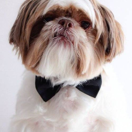 Bond Velvet Bow Tie - Sir Dogwood