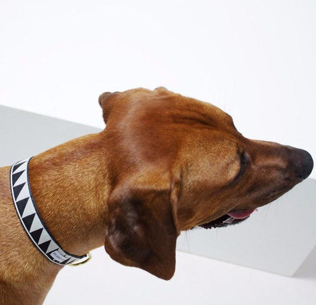 Nice Grill Collar Ivory & Black - Sir Dogwood