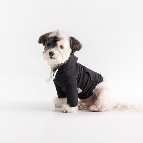 Crop Hoodie Black - Sir Dogwood