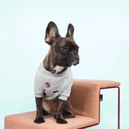 Spring Garden Sweater - Sir Dogwood