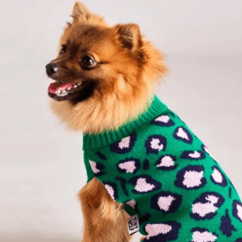 Green Leopard Sweater - Sir Dogwood