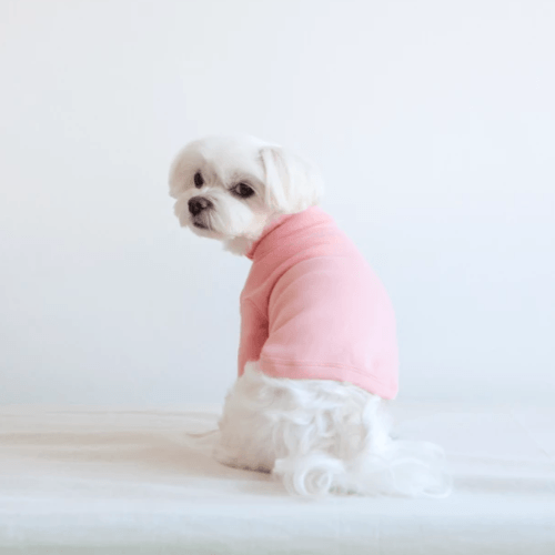 Stripe Point Turtleneck Pink - Sir Dogwood