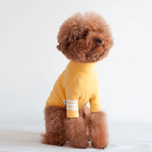 Stripe Point Turtleneck Yellow