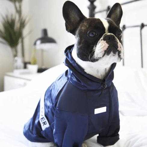 Ribbon Thin Coat Navy - Sir Dogwood