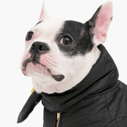 Puffy Scarf Black - Sir Dogwood
