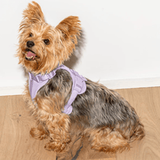 Cushioned Dog Harness Lilac - Sir Dogwood