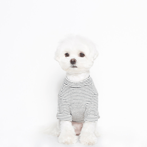 Believe Cotton T-Shirt White - Sir Dogwood
