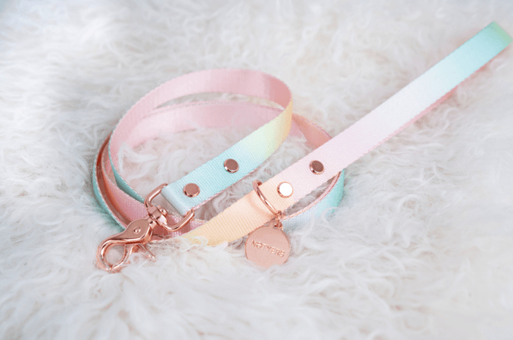 Sorbet Web Leash - Sir Dogwood