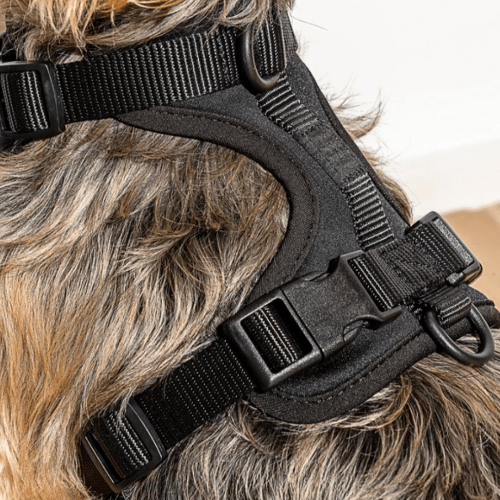 Cushioned Dog Harness Black - Sir Dogwood