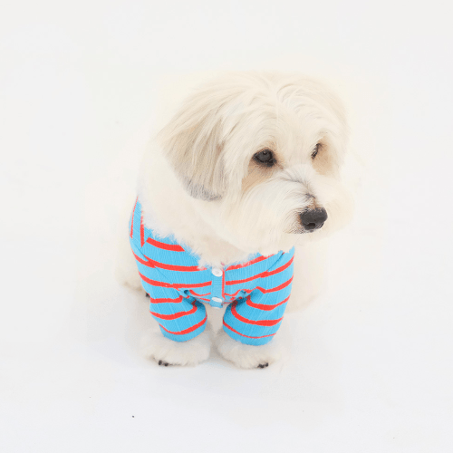 Preppy Stripe Cardigan Blue - Sir Dogwood