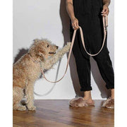 Durable Dog Leash Blush - Sir Dogwood