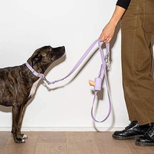 Durable Dog Leash Lilac - Sir Dogwood