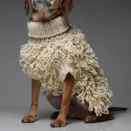 Curly Knit Sweater - Sir Dogwood