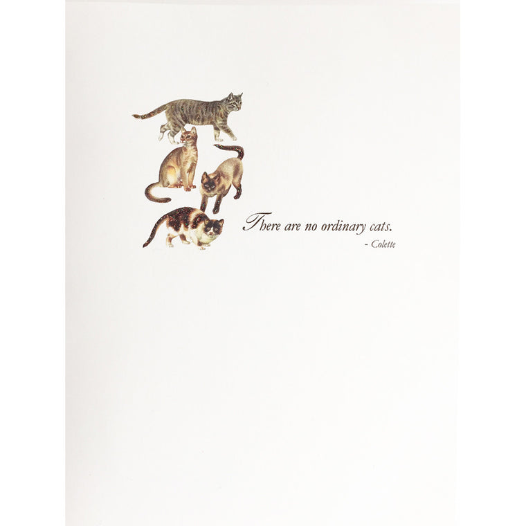 Greeting Card Ordinary Cats - Lumia Designs