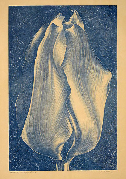 Tulip, 1965 by Lowell Nesbitt