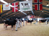 Danish Breedig Cattle