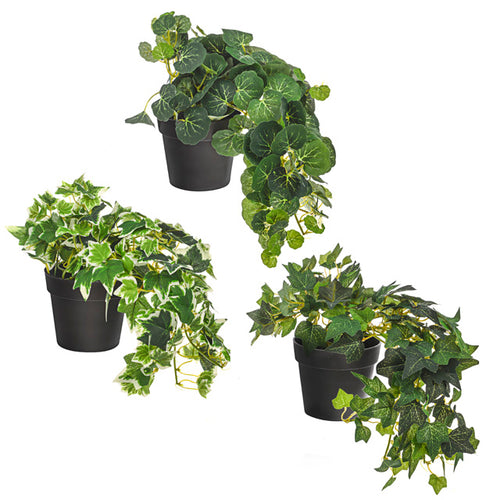 Artificial Plant - Potted Ivy