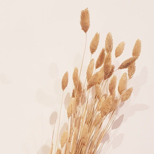 CFS - Dried Grass (Phalaris)