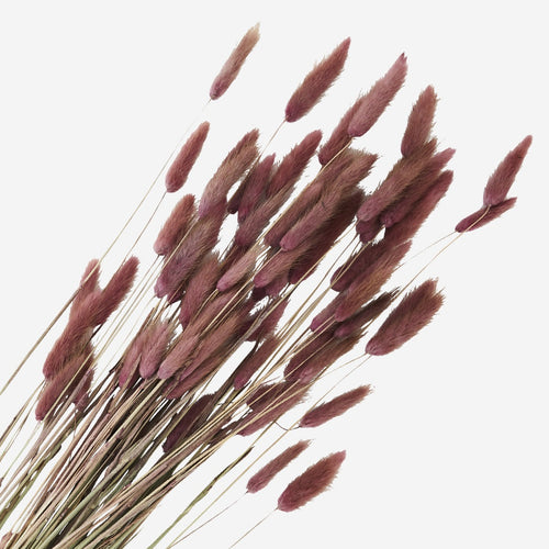 Madam Stoltz Dried Flowers - Bunny Tails Fuschia