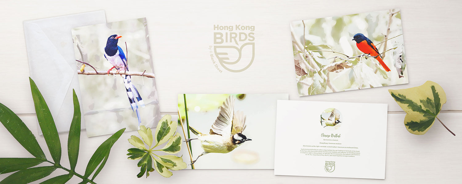 Hong Kong Birds Note Cards