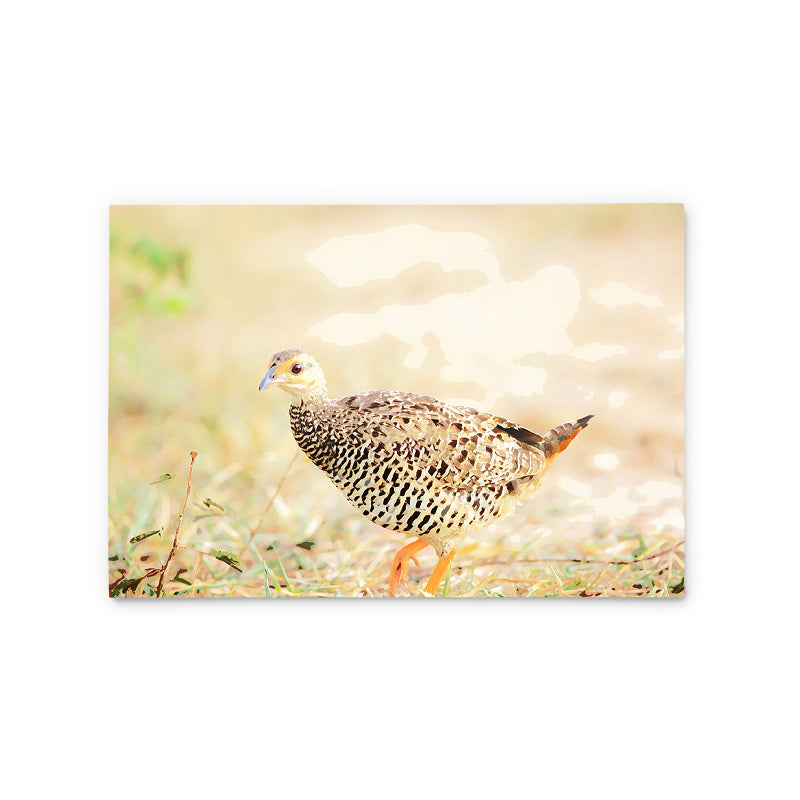 Chinese Francolin | Hong Kong Birds Note Cards by Blank Sheet