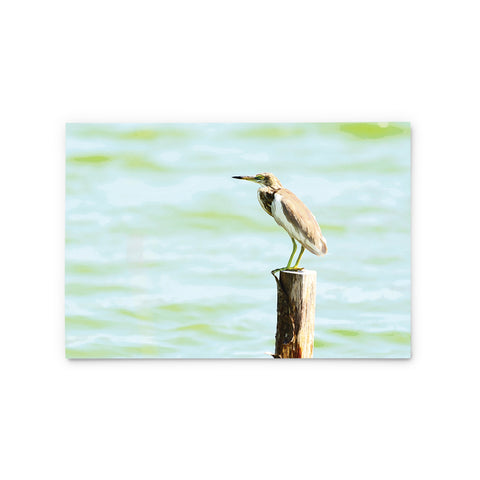 Chinese Pond Heron | Hong Kong Birds Note Cards by Blank Sheet