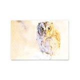 Collared Scops Owl | Hong Kong Birds Note Cards by Blank Sheet
