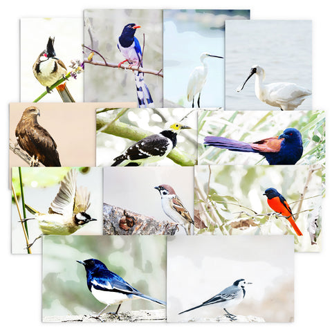 Assorted pack of 12 - Hong Kong Birds Note Cards