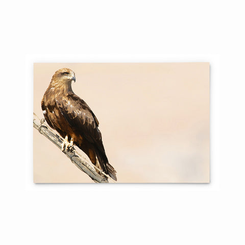 Black Kite | Hong Kong Birds Note Cards by Blank Sheet