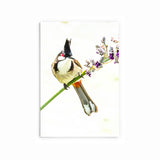 Red-Whiskered Bulbul | Hong Kong Birds Note Cards by Blank Sheet