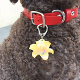 Lily | Personalized Pet ID Tags for Dogs & Cats by Blank Sheet
