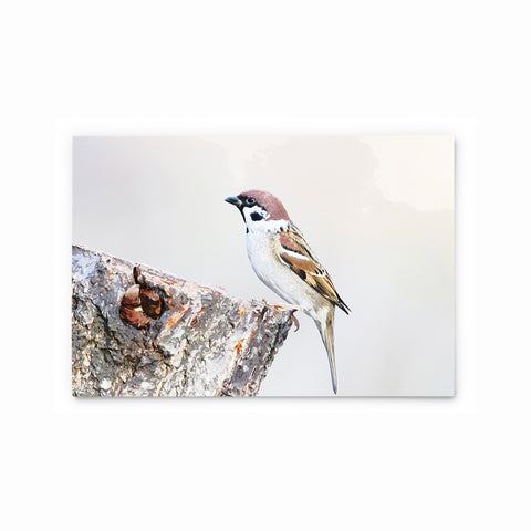 Eurasian Tree Sparrow | Hong Kong Birds Note Cards by Blank Sheet