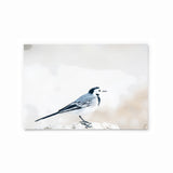 White Wagtail | Hong Kong Birds Note Cards by Blank Sheet