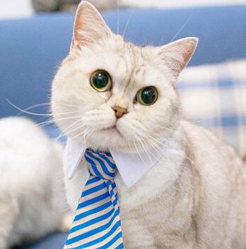 Cat toy ,Pet bow ties, cat Tie, dog tie Cat CEO