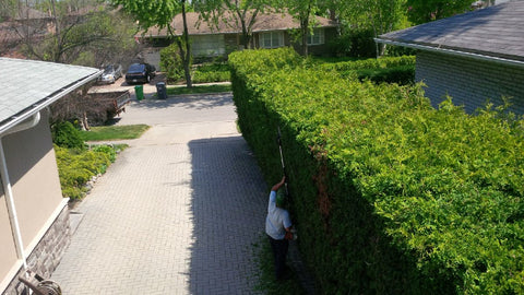 P. McConnell Contracting, PMC Greenscapes, Etobicoke Landscaping, Toronto, MIssissauga, Hedge Trimming