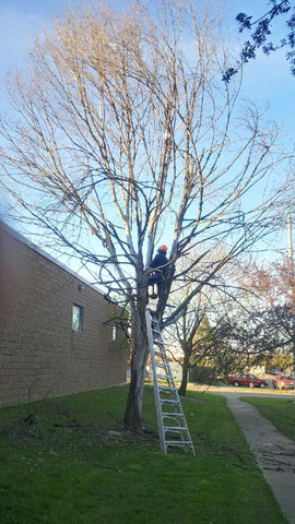 P. McConnell Contracting, Etobicoke Landscaping, Toronto, Mississauga, Tree Removal