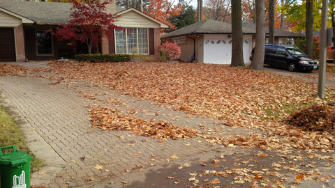 P. McConnell Contracting, PMC Greenscapes, Landscaping, Etobicoke, Toronto, Mississauga, Leaf Cleanup