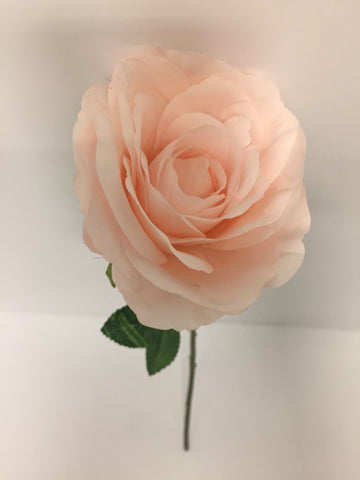 Light Pink Open Rose