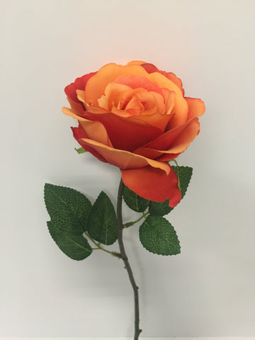 Orange Open Rose