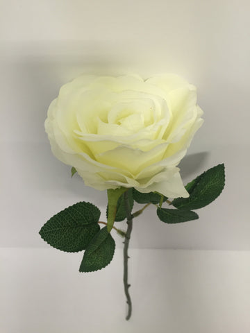 White Open Rose