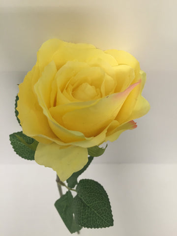Yellow Open Rose