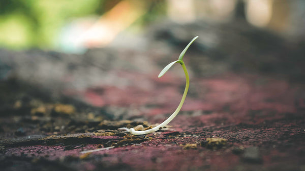 Seedling growing from the cracks of the Earth