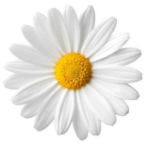 Best Ingredients for Skin Care - Daisy Flower Extract
