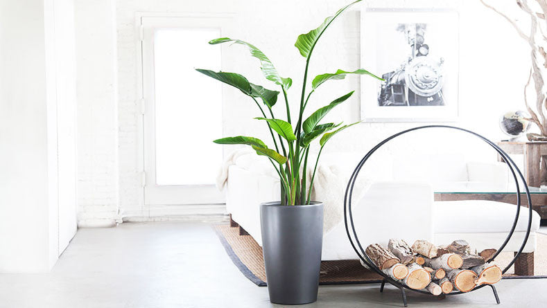 Refresh Your Home - The Best House Plants For Each Room!