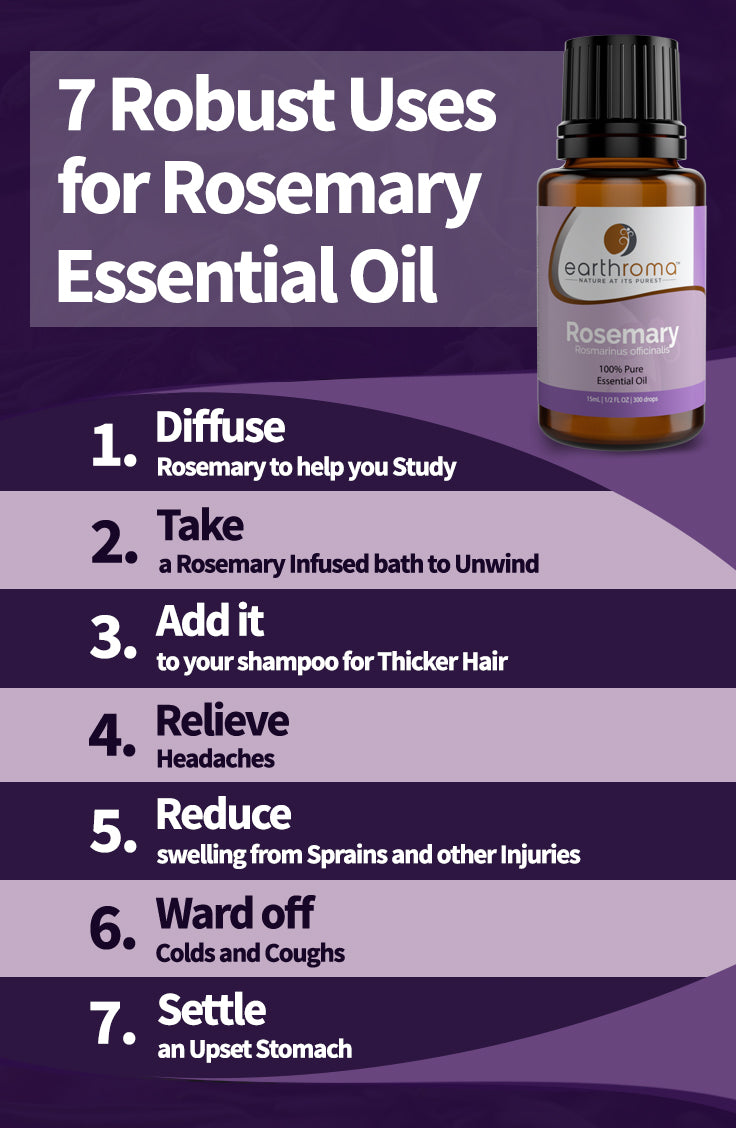 7 Rosemary Essential Oil Uses Benefits And Recipes Earthroma Oil