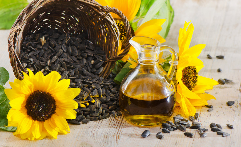 Best Oils for Beards: What are the Benefits of Using Sunflower Oil for Beard Care?