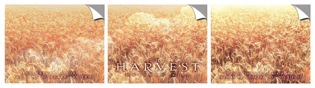 The Harvest - triptych - Peel & Stick